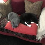 Upholstery Fabric Padded Mats for Cats & Dogs (pick pattern & size)